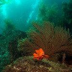 scuba diving in catalina island